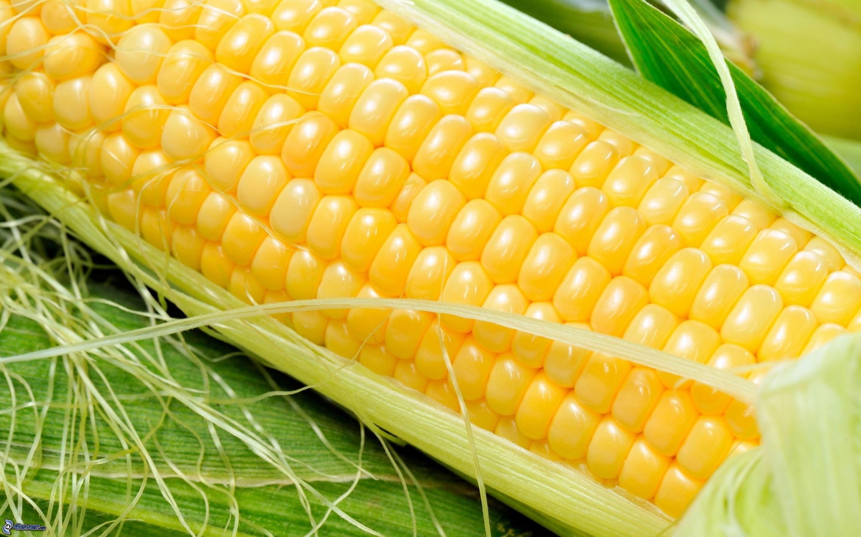 Perspectivas para la campaña de maíz 2013-2014