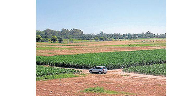 Rindes máximos para maíz en el sur de Córdoba